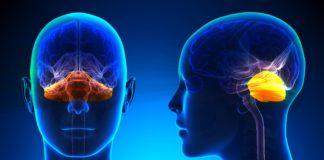 Мозжечковая атаксия симптомы и лечение